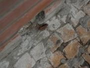 Velório Municipal é invadido por baratas